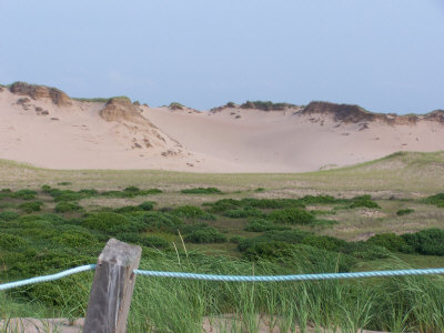 sand dunes at Greenwich Beach